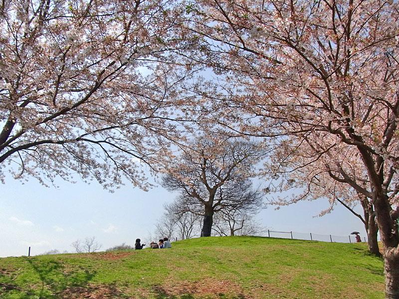 100408榎と桜3