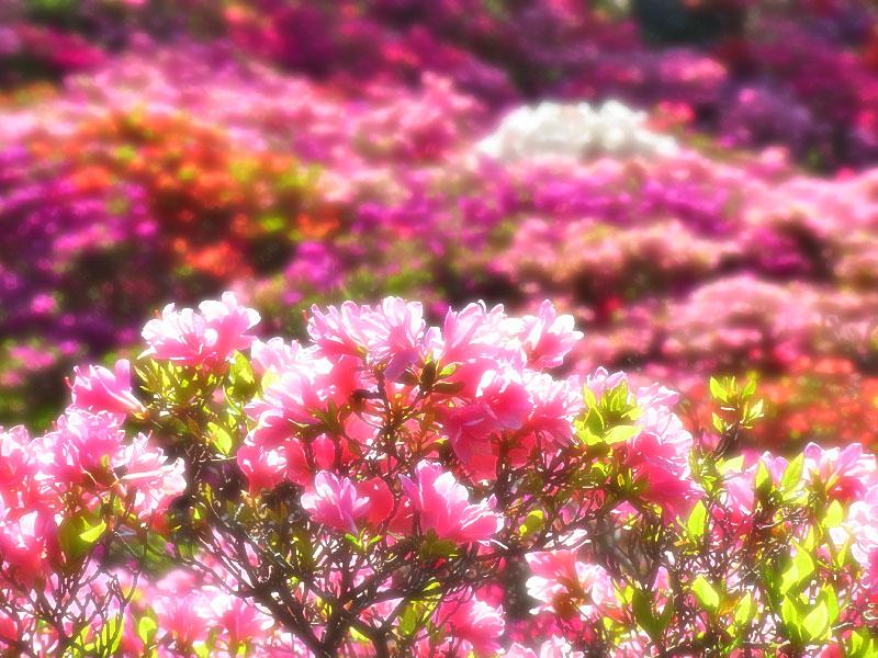 100425花の木公園3