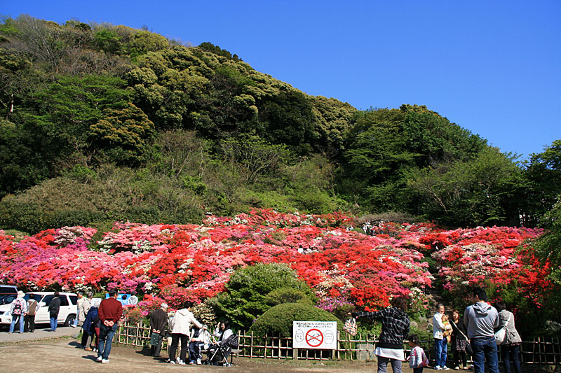 100425花の木公園4