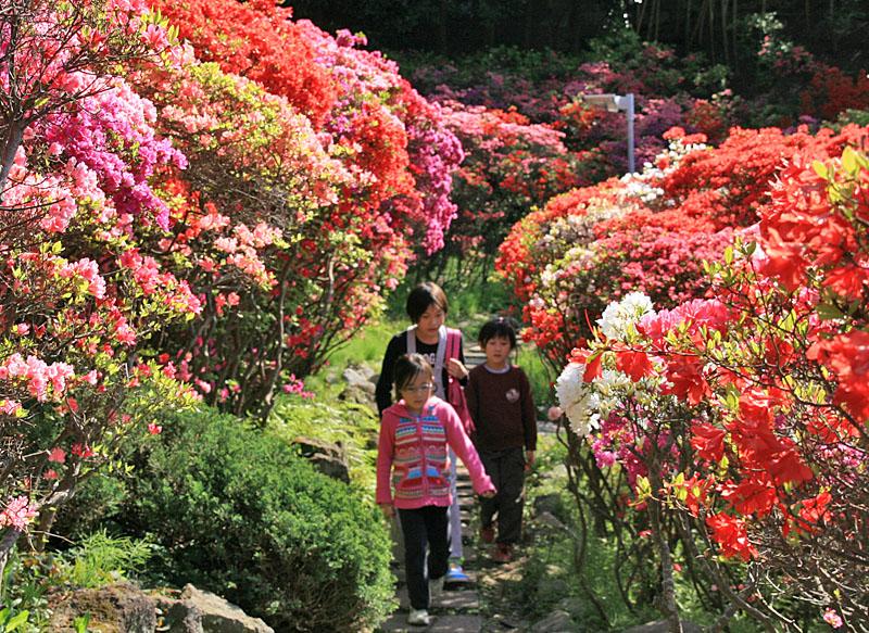 100425花の木公園2