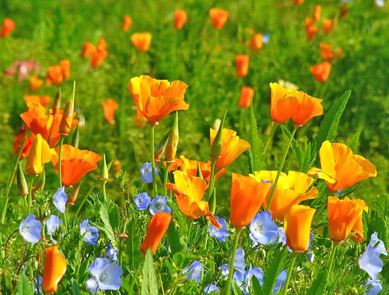 100502花の国6