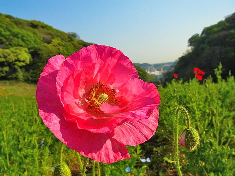 100502花の国1
