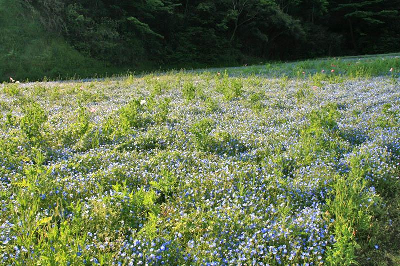 100502花の国5
