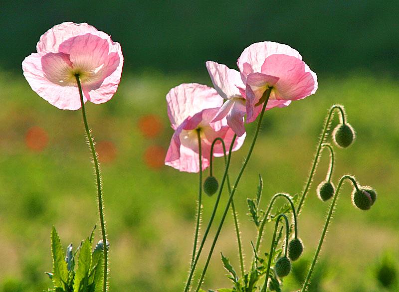 100502花の国2
