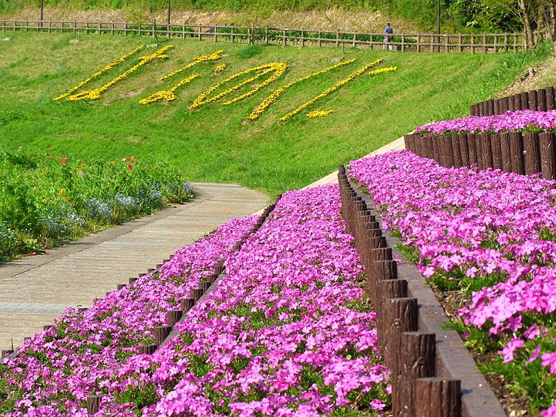 100502花の国9