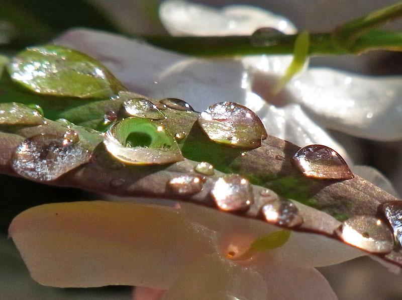 100512雨上がりの水晶たち5