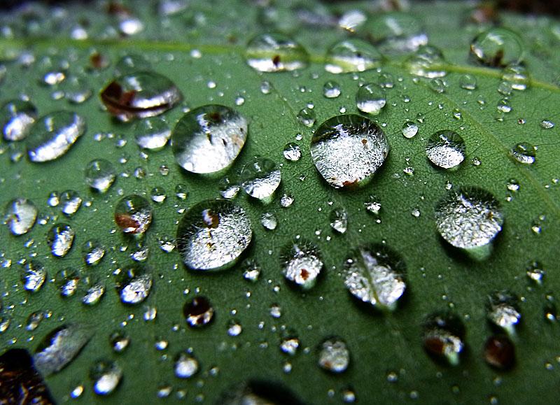100512雨上がりの水晶たち4