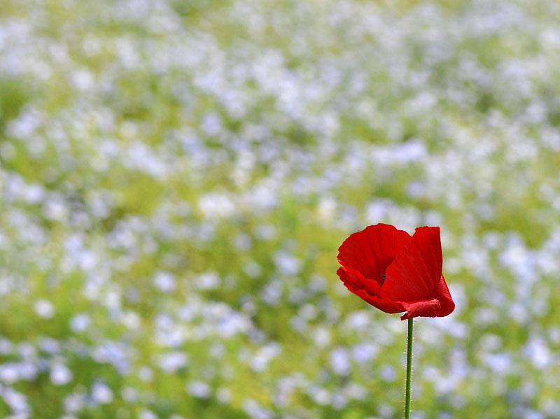 100516花の国4