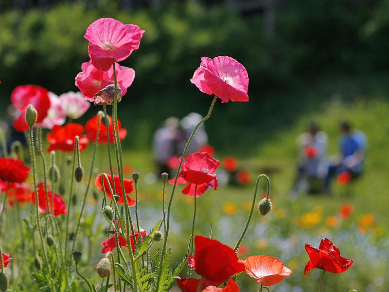 100516花の国2