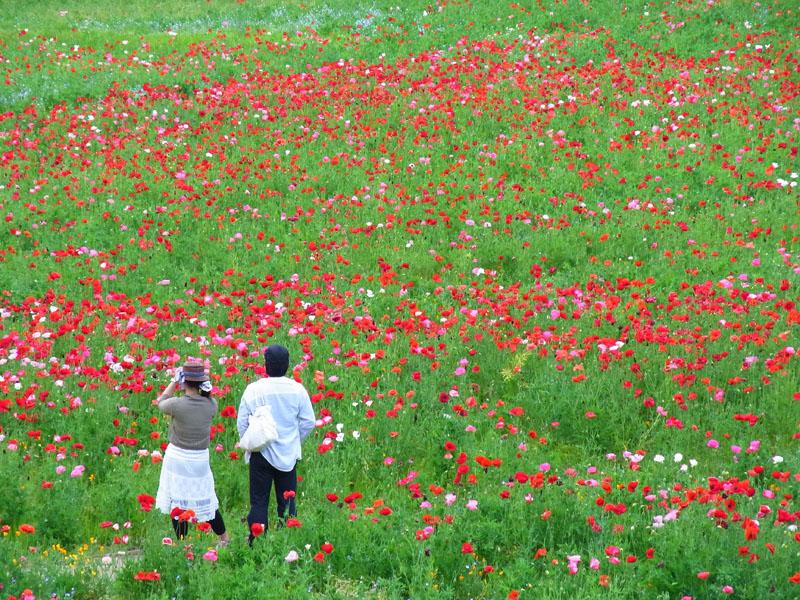 100516花の国6