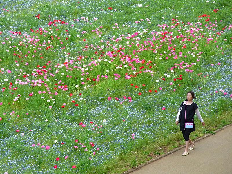 100516花の国7