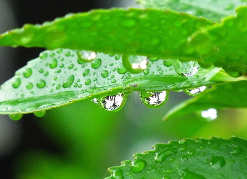 100704雨上がりの朝3