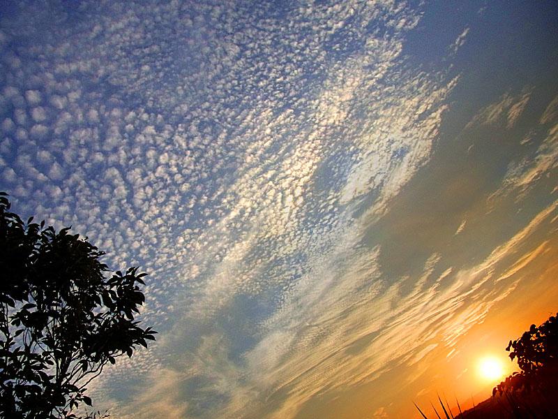 100903うろこ雲1