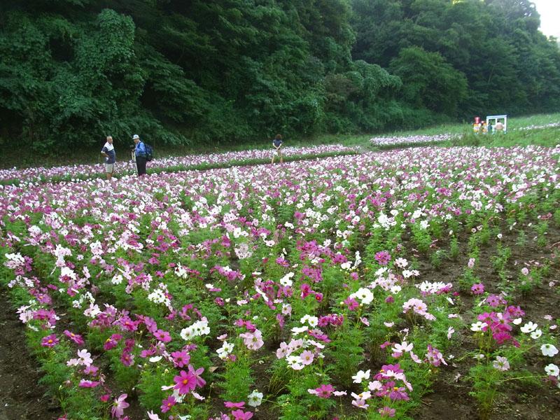 101011花の国1