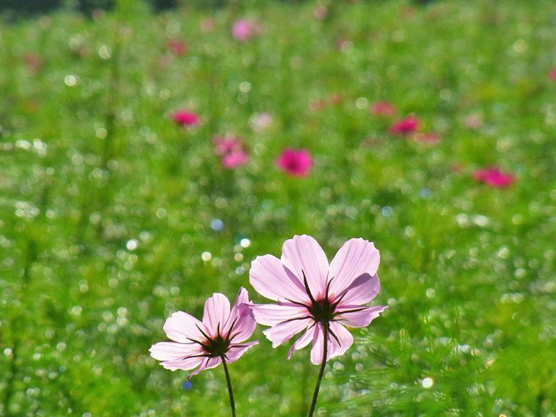 101011花の国3