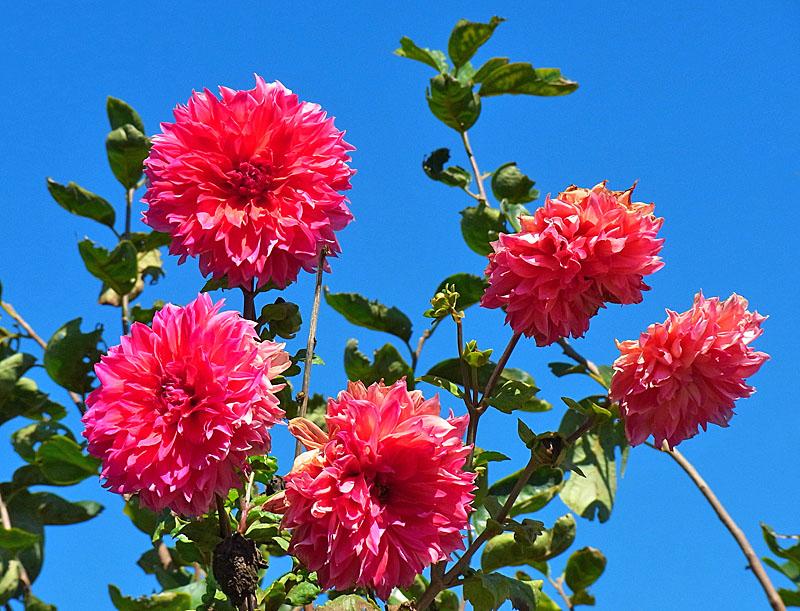 101011花たち3