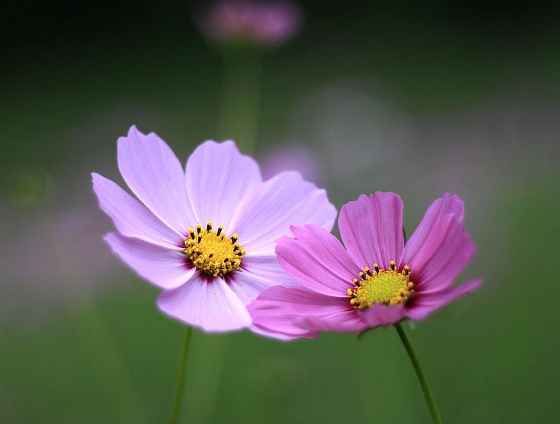 101024今日の花の国6
