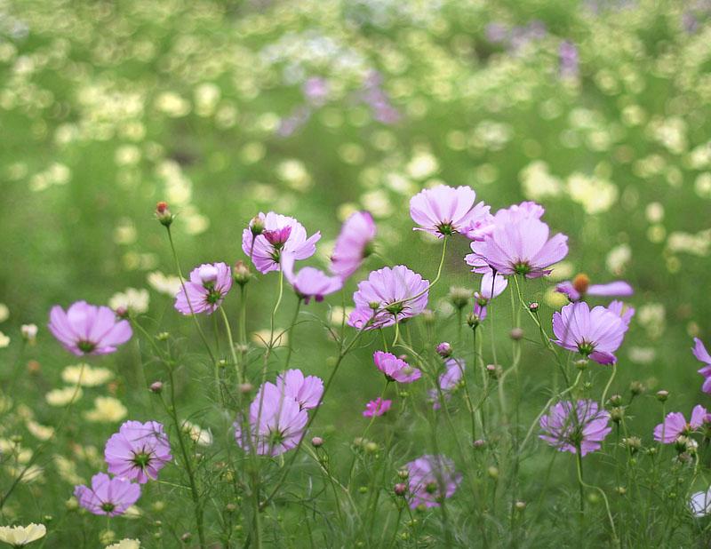101024今日の花の国3