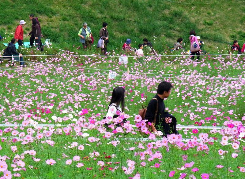 101024今日の花の国1