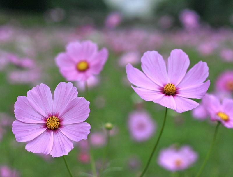 101024今日の花の国2