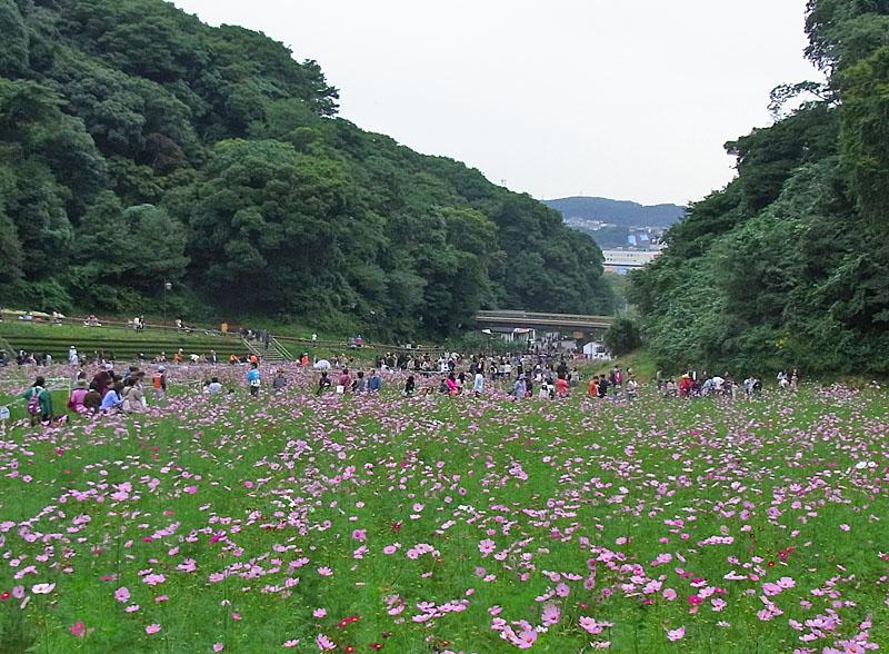 101024今日の花の国7
