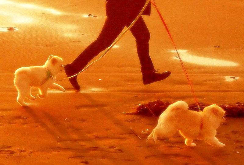 091115犬の散歩