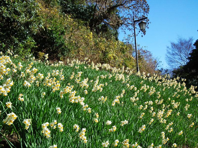 110109花の国1月2