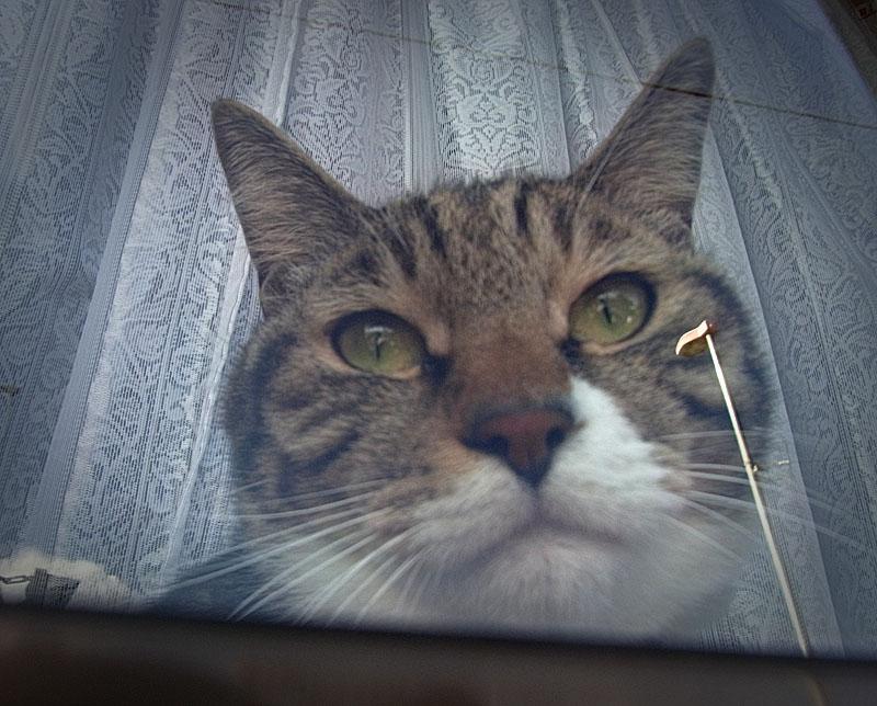 110116猫窓2