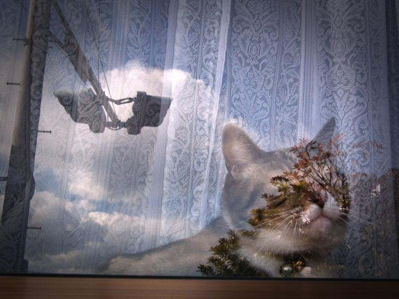110116猫窓1