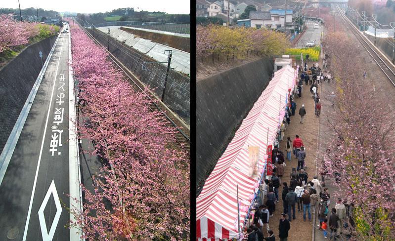 110227河津桜と京急電車5++