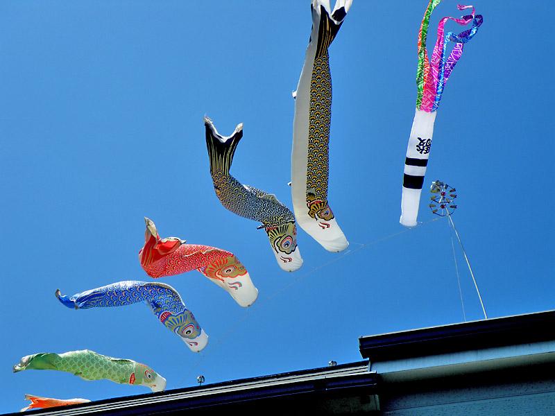 20090415鯉のぼり