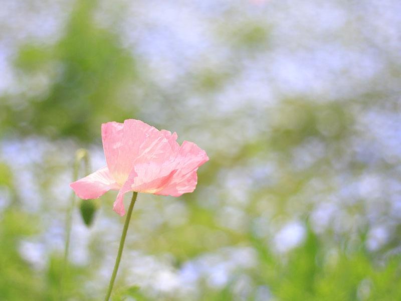 110430花の国5