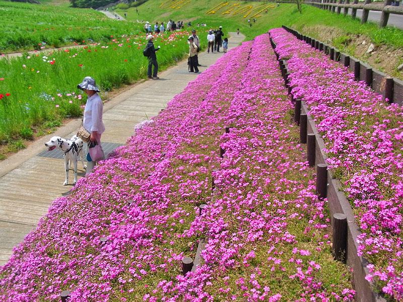 110430花の国4