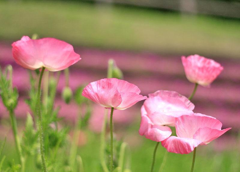 110430花の国1