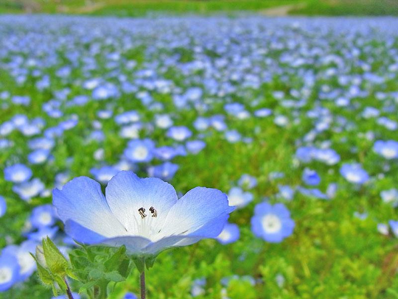 110430花の国7