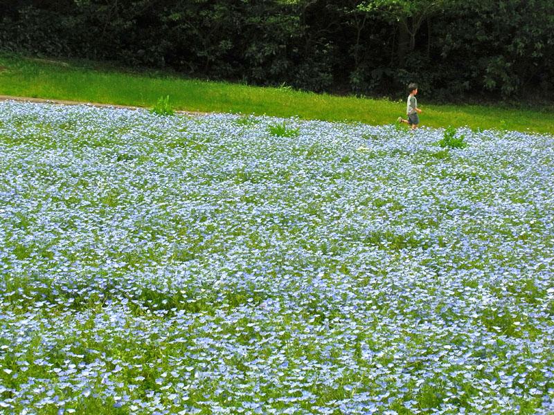110430花の国8