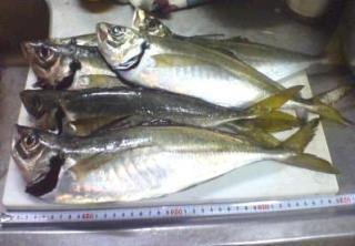 悠遊さん釣果(2008_1224)