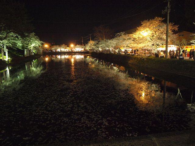 sakura-ue2