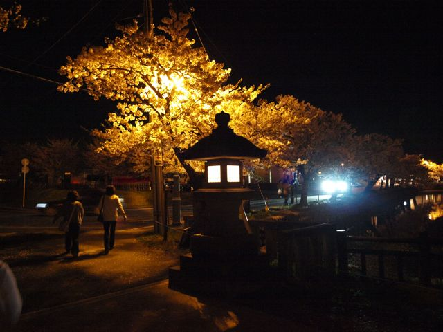 yosakura2