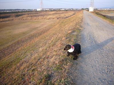 今日の散歩1