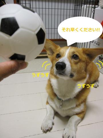 089_20100710135818.jpg