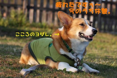 IMG_3723_20091125182426.jpg