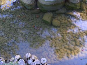 サンアントニオ植物園内:熊本園 1007