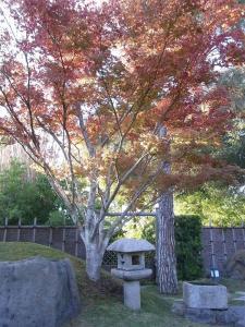 サンアントニオ植物園内:熊本園 1009