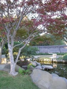 サンアントニオ植物園内:熊本園 1011