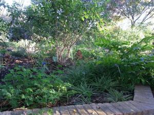 サンアントニオ植物園内:熊本園 1016