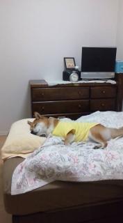ママのベッド