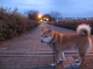 今朝のお散歩