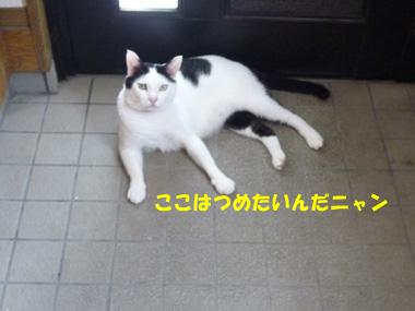P1110898m.jpg