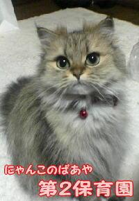 himeko姉